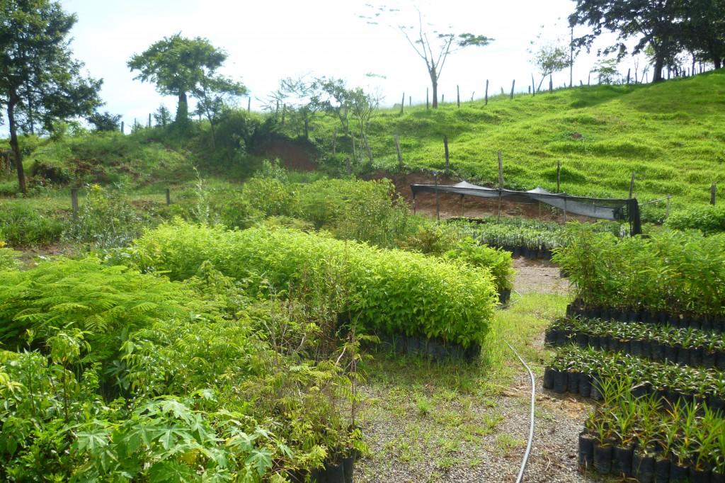 Vivero sostenible de árboles en Brasil
