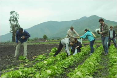 Turistas participando en actividades de agricultura orgánica